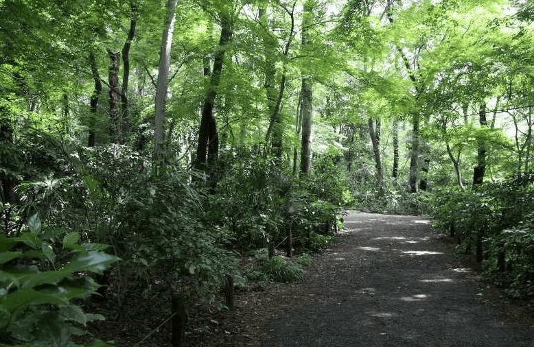 東京パワースポット20選!自然教育園