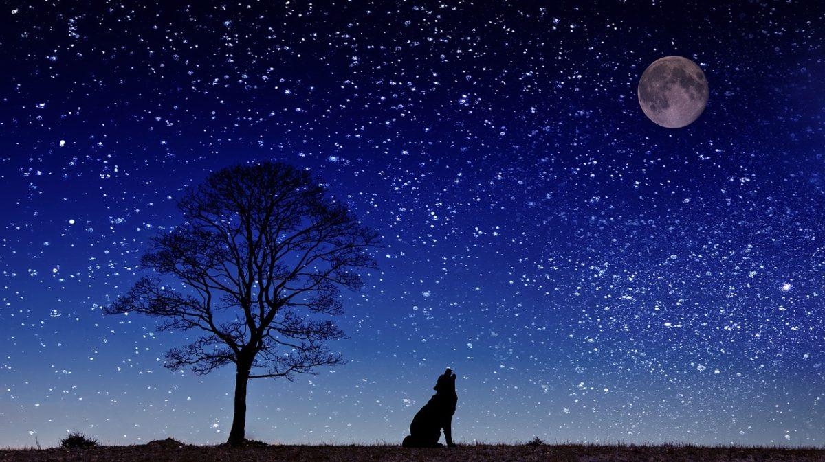 満月の夜に、絶対やってはいけない9つの事のイメージ