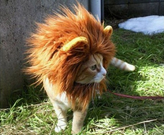いつまでも王様な獅子座の性格を理解して上手に付き合う7つの方法