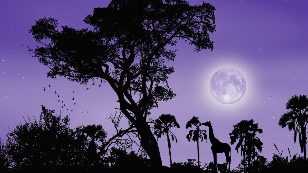 満月にパワーがあると言われる理由と、開運の為の基礎知識のイメージ