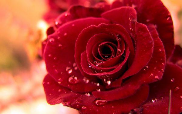 素敵な恋のおまじない、7つの両思いになれる方法
