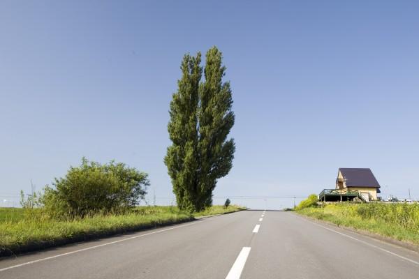 セフィロトの樹から学ぼう。豊かなひらめきを呼び覚ます9つの方法