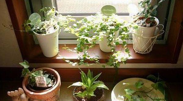 部屋の幸福エネルギーが上昇する 風水で選ぶ7つの観葉植物