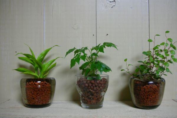 風水で観葉植物を選んで 快適な部屋をつくる7つの方法