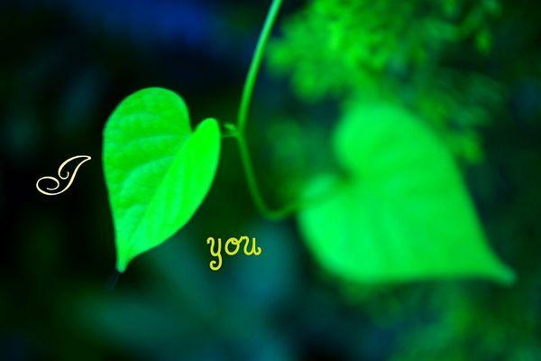 観葉植物を風水で選んで 素敵な恋人を引き寄せる方法