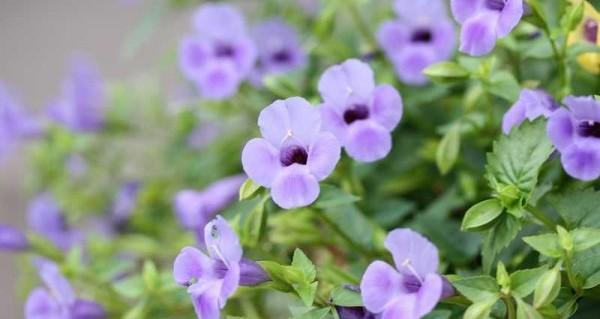 誕生花をつかって日頃の感謝の気持ちを伝える5つの方法