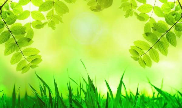 【九星気学】四緑木星が持つ基本的な7つの性格