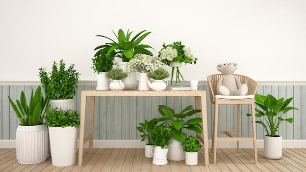 観葉植物の選び方で、風水の効果を上げるには