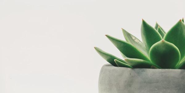観葉植物を風水に生かすポイント
