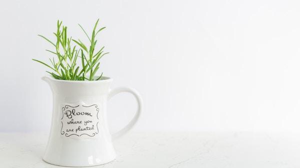 観葉植物で風水の効果を高める種類と置き方