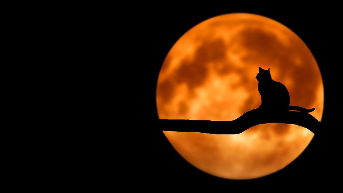 新月と満月に行う願い事