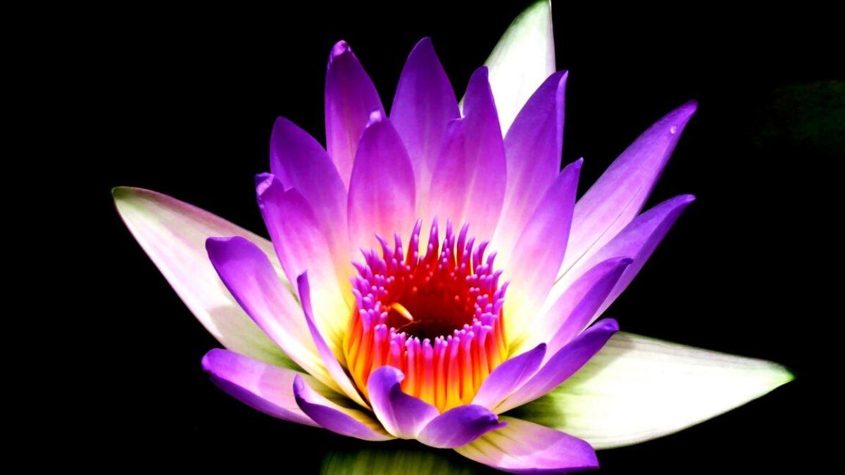 瞑想で安らかなイメージ