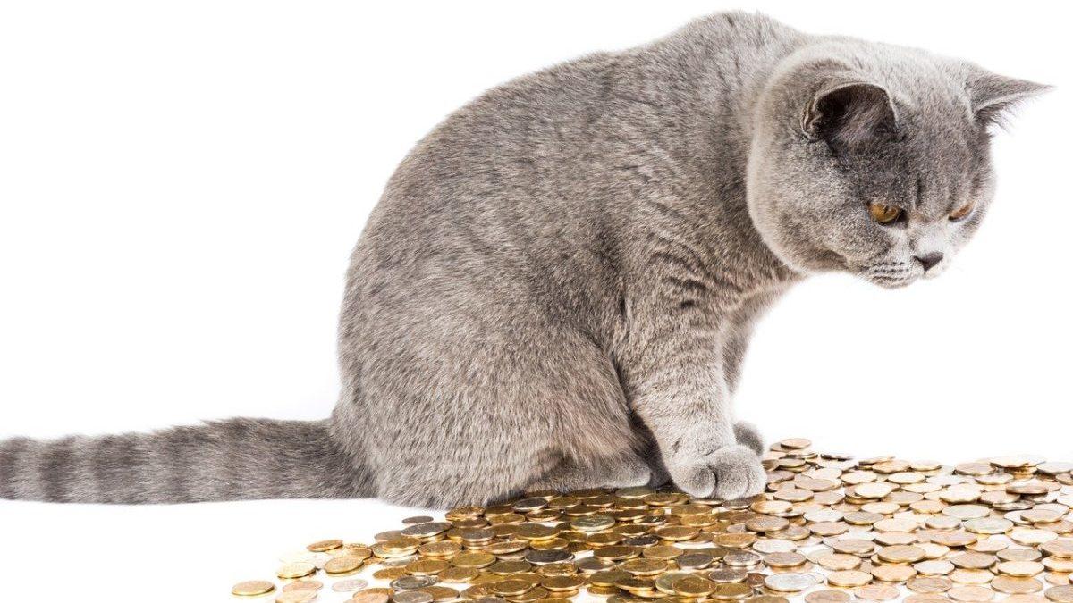 引き寄せの法則を使って金運を上げる為に必要な事